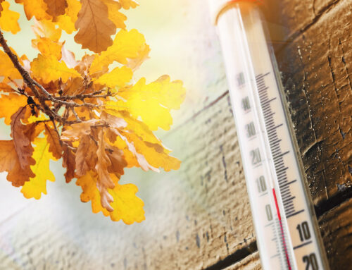 Come One, Come Fall! Seasonal Prep for Your Specific Climate